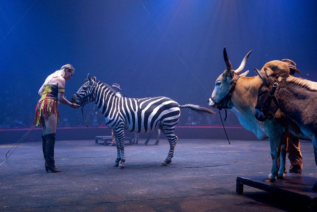les animaux exotiques du Cirque Arlette Gruss Sarah Houcke